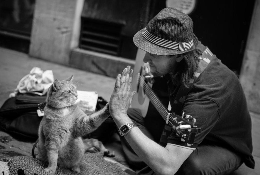 James Bowen + Bob the cat