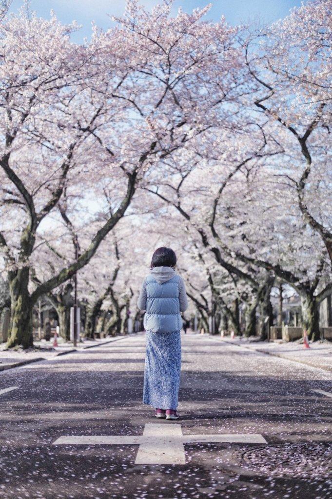 Goodbye Sakura